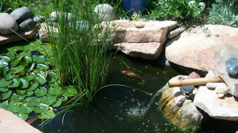 Small Koi Container Pond