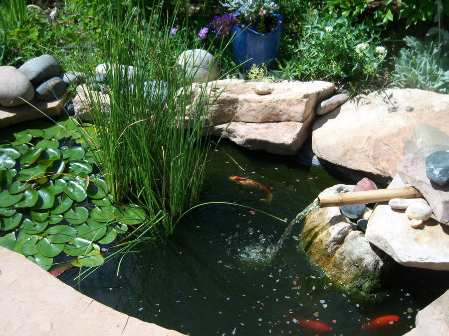 How to keep a small fish pond clean for Koi pond small